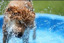 Water Dogs / by SPCA of Texas