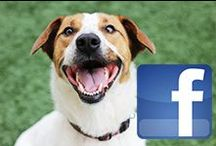 Connect with Us!  / Love hanging out with the SPCA of Texas on Pinterest? Connect with us on other social networks, too! Together, we can help animals in North Texas get care and find loving homes!