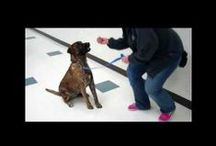 Training Tidbits / Have questions about how to teach your dog basic obedience commands or about caring for your cat? The SPCA of Texas Behavior Department offers you some handy tips with this web series! For more information & training tips, visit us at www.spca.org.