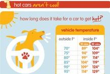 Summer Heat Safety / by SPCA of Texas