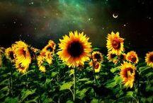 Litha the Summer Solstice / June 21st, mid-summer