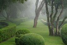 Secret Garden / by Olga Sher
