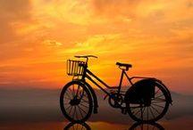 Bikes and wagons