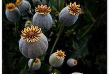 Flora / plants, flowers / by Lori Plyler