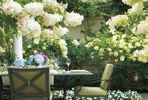 | The Garden |