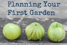 Gardening 101 (and More) / Whether you're a beginner gardener or an expert gardener, here you'll find great gardening tips, gardening tricks, gardening hacks, and information about how to start and care for a garden.