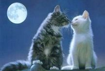~I♥Love♥ALL♥of♥My♥Kitties~  / by Denise Gremillion
