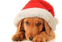 Christmas / The best selection of Christmas photos, image and vectors