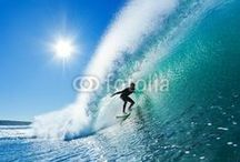 Surf's Up / by Fotolia
