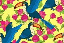 Who can Toucan? / by Fotolia