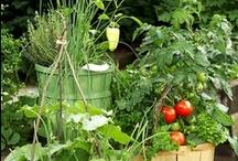 Vegetable Garden ♥♥