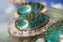 abalone / These beautiful, beautiful mollusks have been hunted to near extinction in many places around the world. In fact, the white abalone was the first invertebrate to be protected by the Endangered Species Act. By growing abalone in a nursery or on a farm we can alleviate fishing pressure, aid in restoration, and feed the insatiable hunger of connoisseurs.