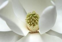 Pretty Petals / flowers / by Heidi Darrington