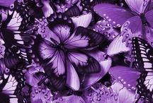 Purple / by Kim Harder