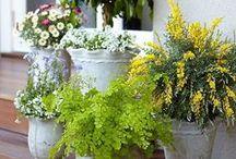 Garden / Tips and Inspiration for Growing a Beautiful Garden