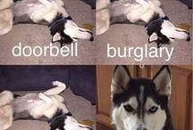Dog Humor / Check out this dog humor board with Giggles brought to you by of our canine companions.