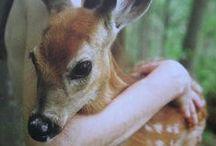 Oh Deer! / deer / by Staci Guthrie
