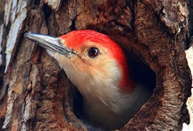 Friends of Tweety / birds / by Staci Guthrie