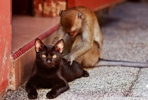 Kingdom: Animalia / animals / by Staci Guthrie