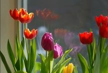 Flowers & Gardens