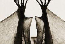 Danse Macabre / by Marcella Campos