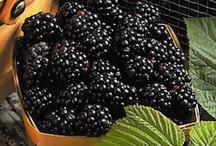 Blackberries / by Tammie Hexum
