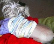 Knit & crochet for pets