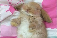 CUTE FLUFFINESS