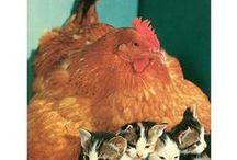 koty, ptaki i inne zwierzaki