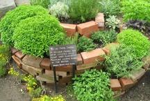 jardin / gardening, growing, being outdoors...
