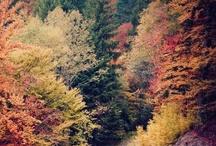 saison : automne