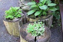 Gardening & Outdoor / by Kristy Dale