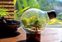 Bright Ideas / Upcycled Light Bulbs