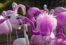 Flamingos / by Melissa Johnson