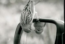 ♥♥♥ Bird Watching♥♥♥ / by Fran Williams
