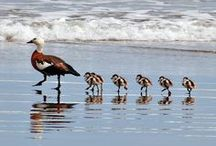 Follow the leader / by Beverly Terry