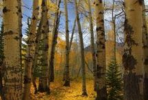 Fabulous Trees / by Beverly Terry