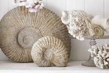 Things I like to collect | shells coral