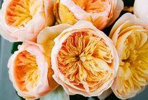 Flowers II / by StyleCarrot • Marni Katz