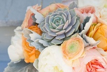 Succulents / by Cori Cook