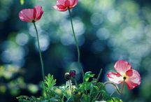 Gardens | Flowers + Landscaping
