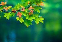 Fall + Autumn