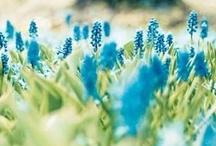 Spring I / by Kimo&Henele