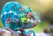 Fauna | Around The World