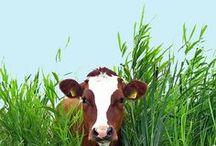 Fauna | Farmyard + Paddock 1