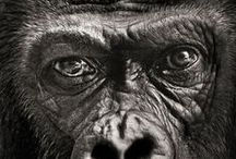 Monkeys and Animals / Beautiful innocents