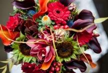 Wedding / by Mindy Davenport