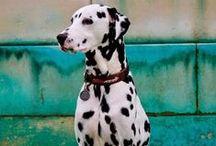 Fauna | Pets 2