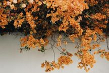 flora ⋅