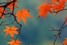 Fall + Autumn | Orange